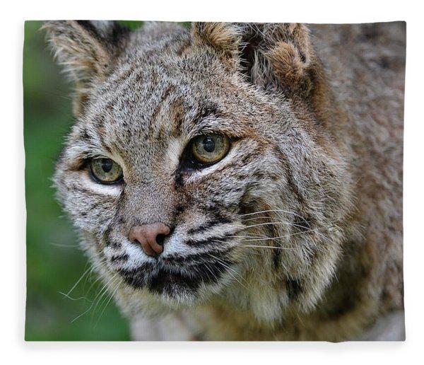 Bobcat In The Trees Fleece Blanket