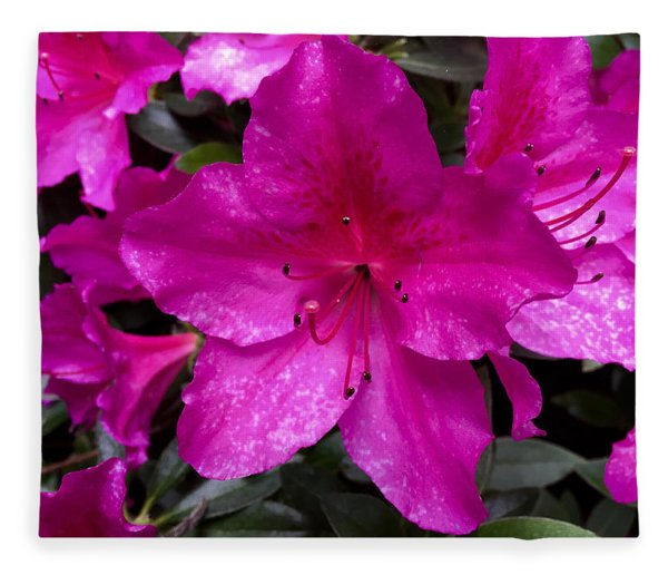 Bold Pink Flower Fleece Blanket