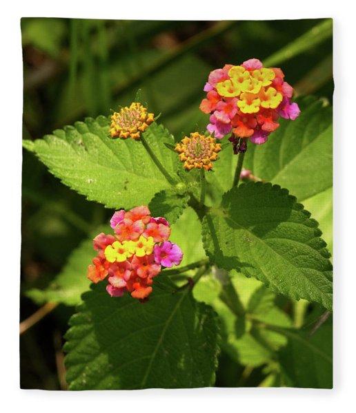 Bright Cluster Of Lantana Flowers Fleece Blanket