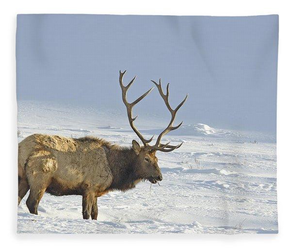 Bull Elk In Snow Fleece Blanket