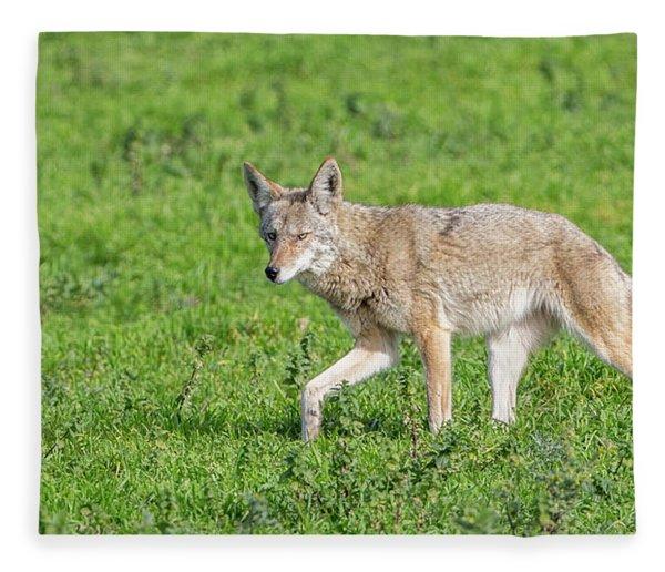 California Walk  Fleece Blanket