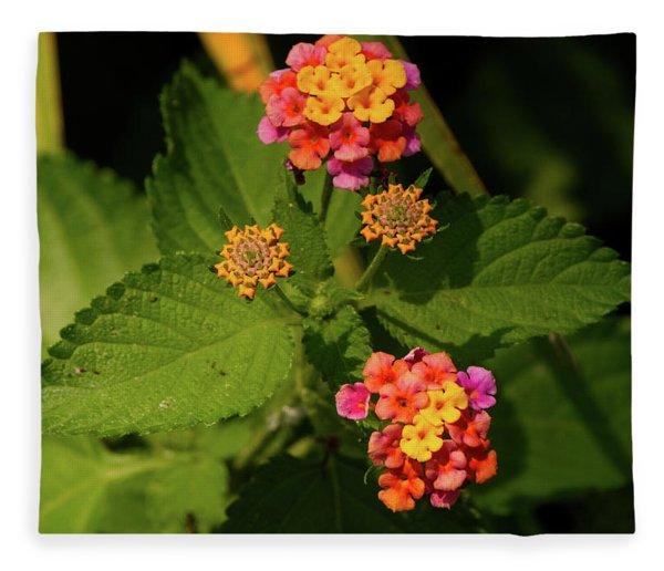 Cluster Of Lantana Flowers Fleece Blanket