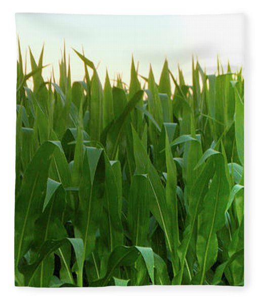 Corn Of July Fleece Blanket