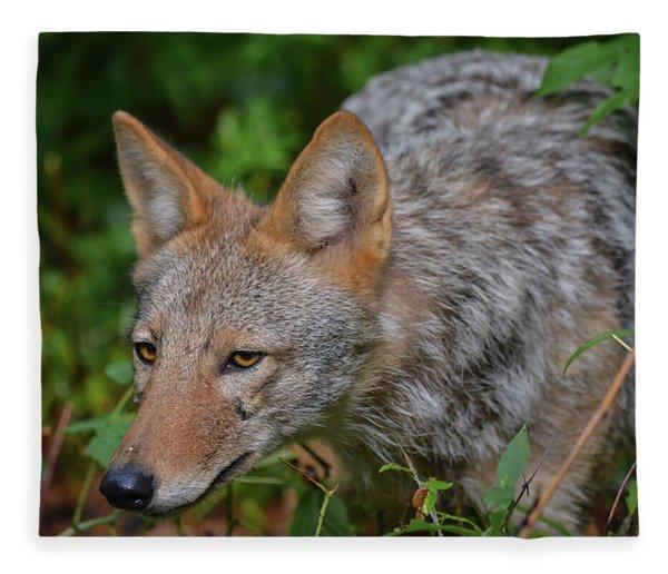Coyote On The Hunt Fleece Blanket