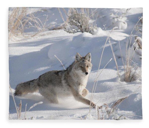 Coyote On The Move Fleece Blanket