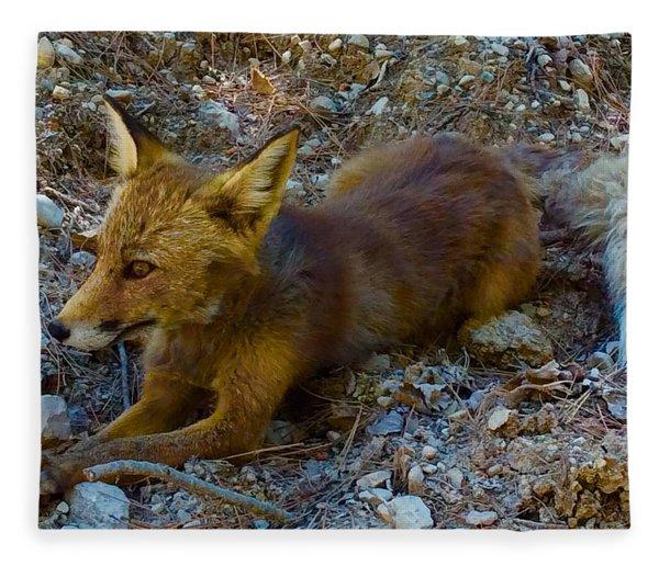 Fleece Blanket featuring the photograph Cute Fox Friend  by Colette V Hera Guggenheim
