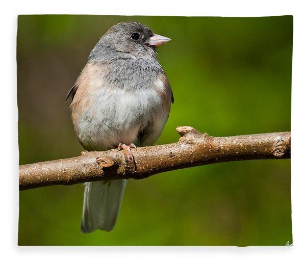 Dark Eyed Junco Perched On A Branch Fleece Blanket
