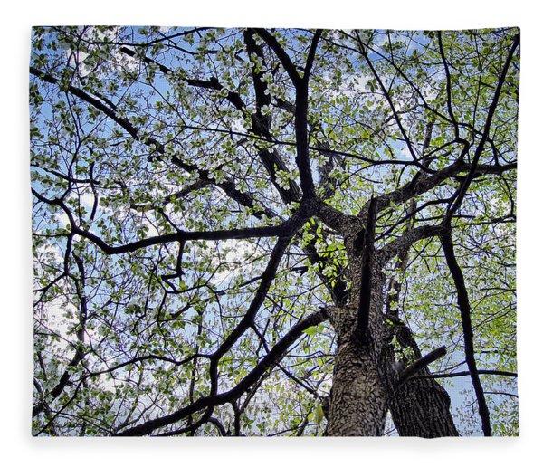 Dogwood Canopy Fleece Blanket