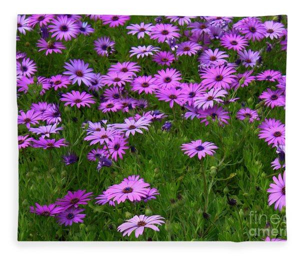 Dreaming Of Purple Daisies  Fleece Blanket