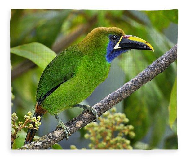 Emerald Toucanet Fleece Blanket