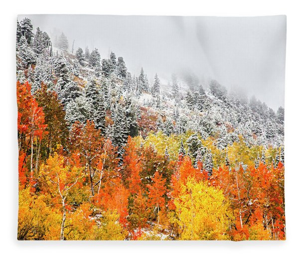 Fall To Winter Canvas Print, Photographic Print, Art Print, Framed Print, Greeting Card, Iphone Case Fleece Blanket