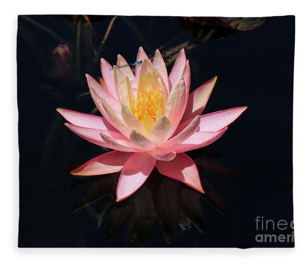 Familiar Bluet Damselfly And Lotus  Fleece Blanket