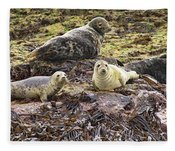 Farne Island Seals Fleece Blanket
