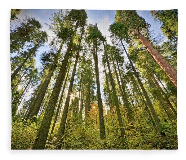 Forest Of Light Fleece Blanket