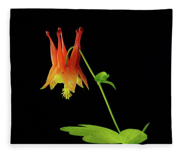 Glowing Colombine Fleece Blanket