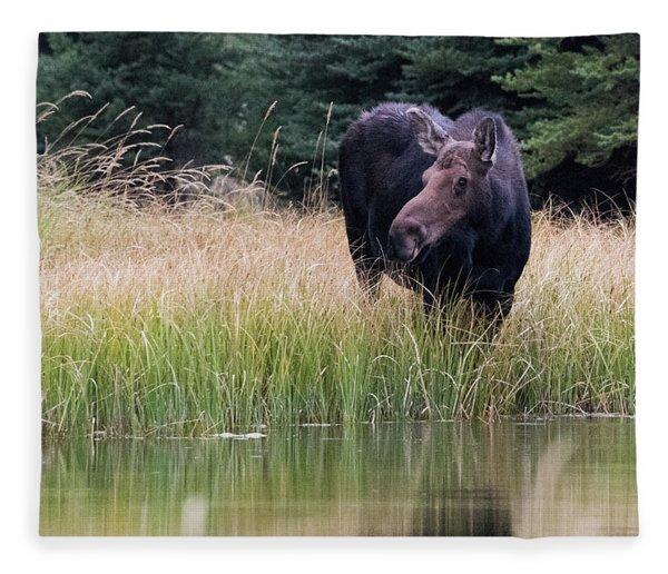 Grand Teton Moose Fleece Blanket
