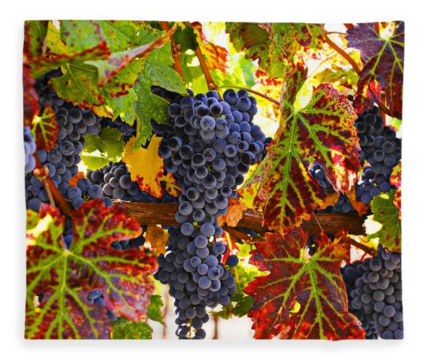 Grapes On Vine In Vineyards Fleece Blanket