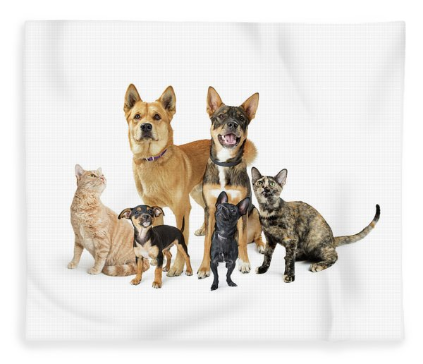 Group Of Cats And Dogs Looking Up On White Fleece Blanket
