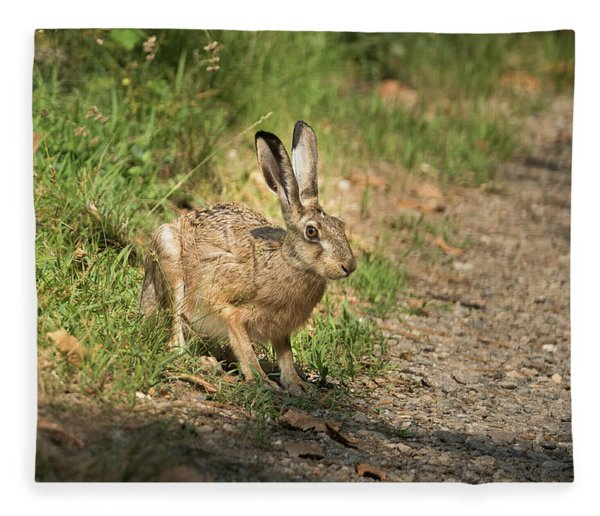 Hare In The Woods Fleece Blanket