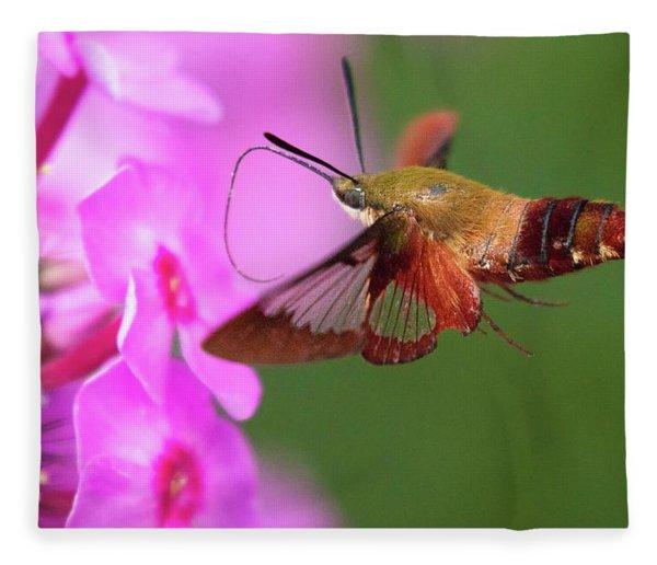 Hummingbird Moth Feeding 2 Fleece Blanket