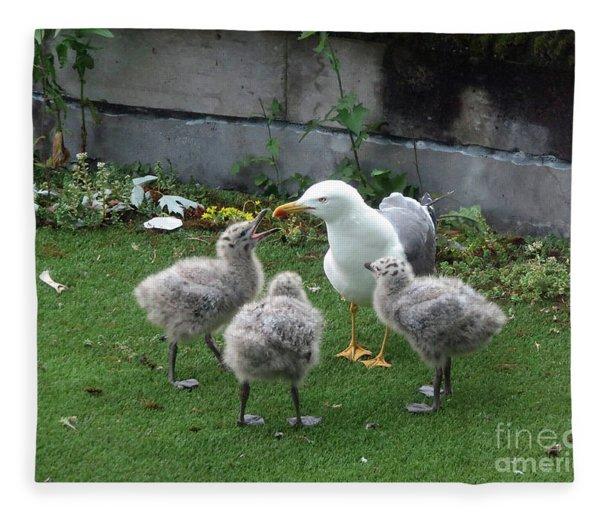 Hungry Baby Seagulls Fleece Blanket