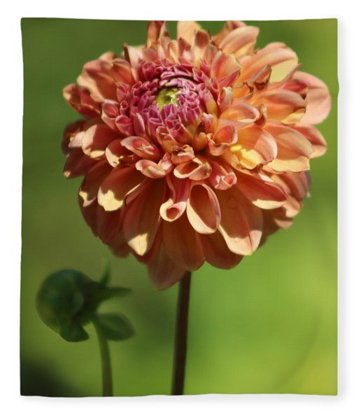 Iced Tea Dahlia In Marzipan And Milano Tones Fleece Blanket
