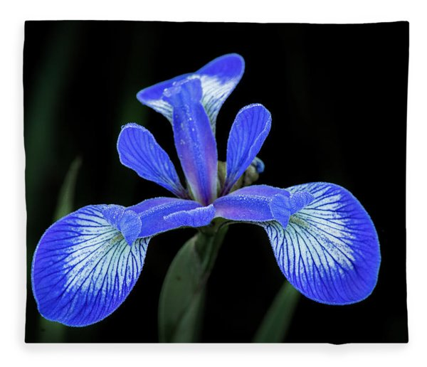 Iris #2 Fleece Blanket