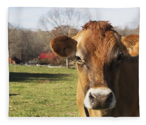 Jersey Cows In Autumn Pasture, Baldwin Fleece Blanket