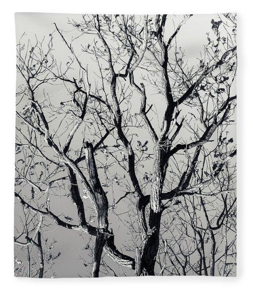 Last Light Oak Fleece Blanket