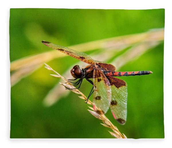 Libelluid Resting On Grass Fleece Blanket