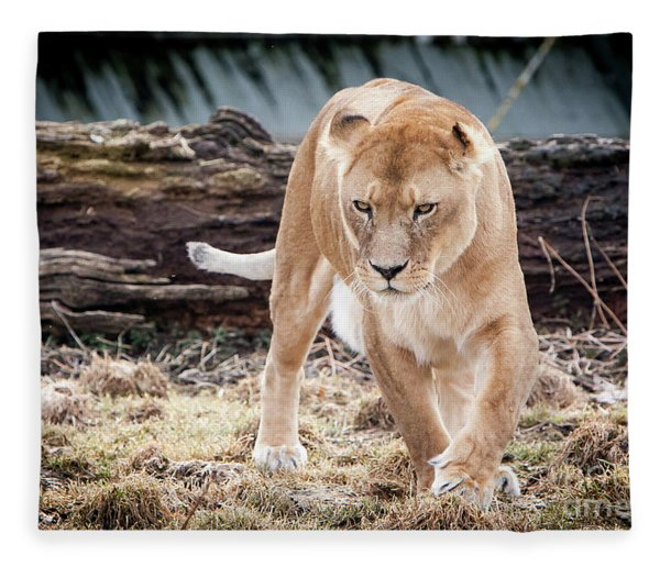 Lion Eyes Fleece Blanket