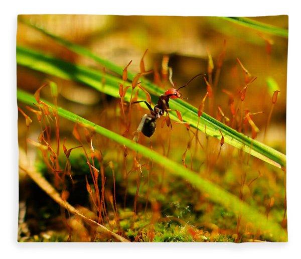 Macro Of An Ant Fleece Blanket
