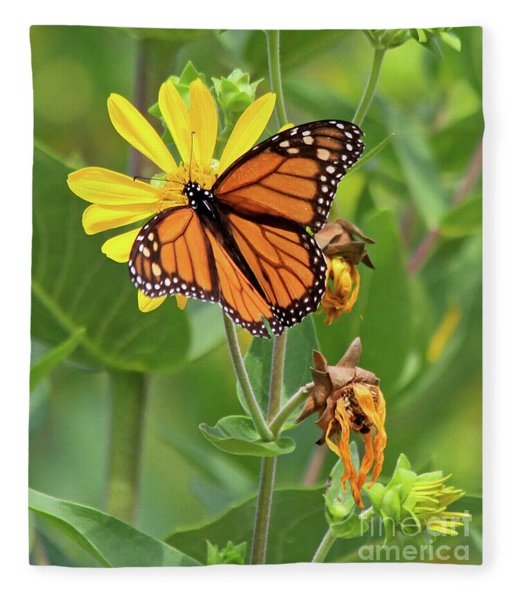 Mighty Monarch   Fleece Blanket