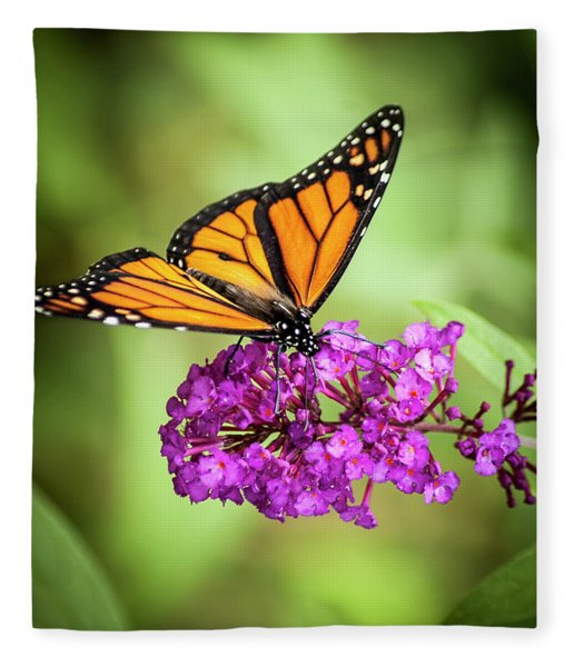 Fleece Blanket featuring the photograph Monarch Moth On Buddleias by Carolyn Marshall