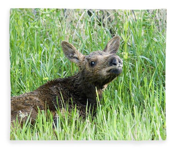 Moose Baby Fleece Blanket