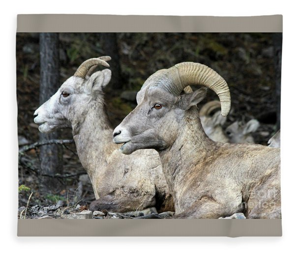 Mt Sheep  Fleece Blanket