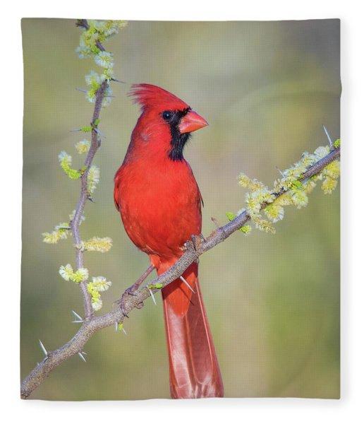 Northern Cardinal Cfh175894 Fleece Blanket