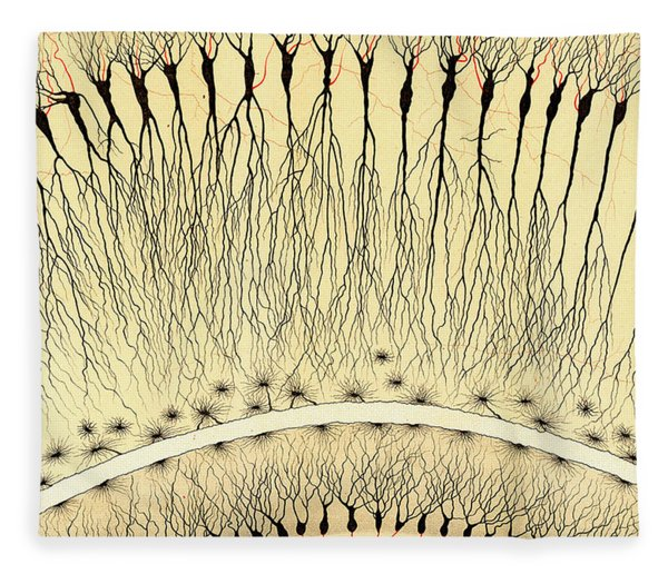 Pes Hipocampi Major Santiago Ramon Y Cajal Fleece Blanket