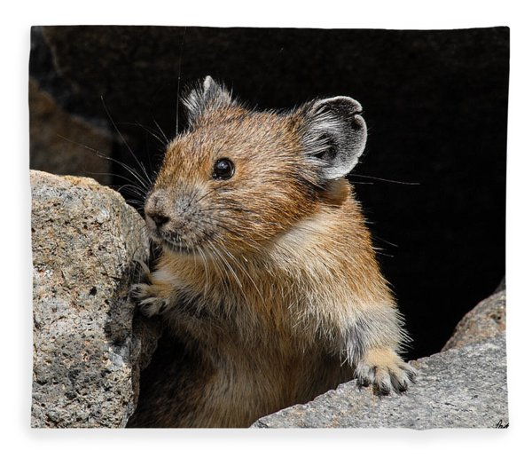 Pika Looking Out From Its Burrow Fleece Blanket