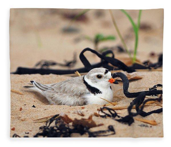 Piping Plover Fleece Blanket