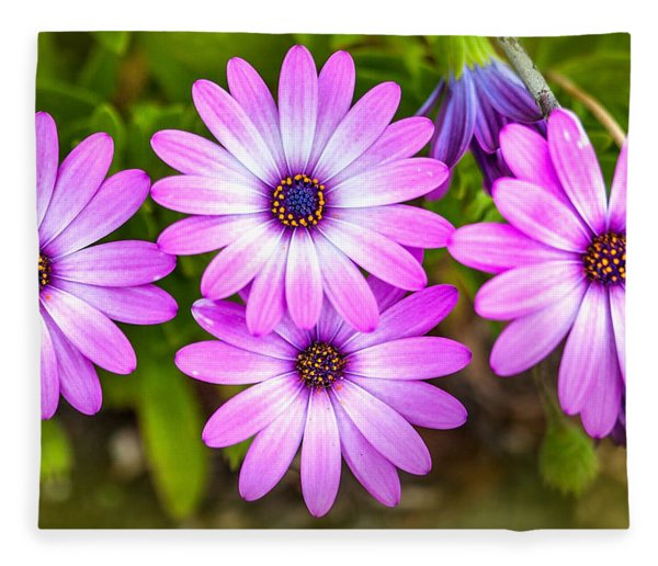 Purple Pals Fleece Blanket