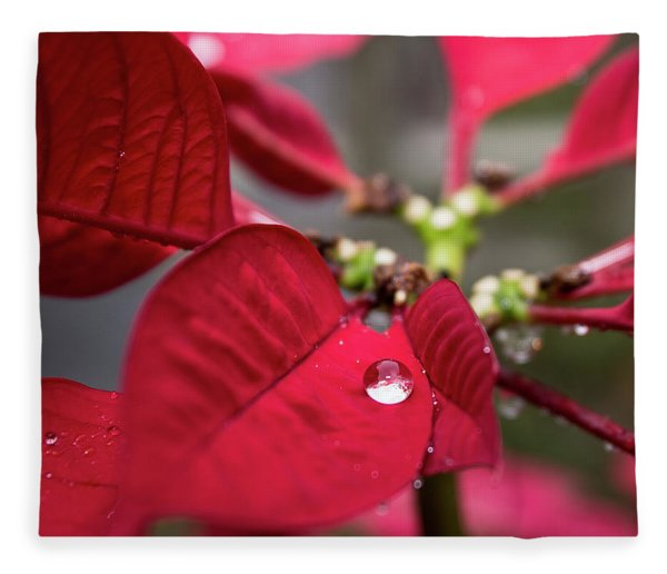 Rain Drop On A Poinsettia  Fleece Blanket