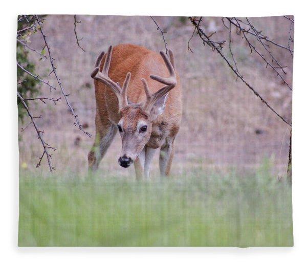 Red Bucks 6 Fleece Blanket