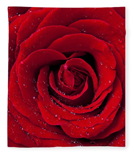 Red Rose With Dew Fleece Blanket