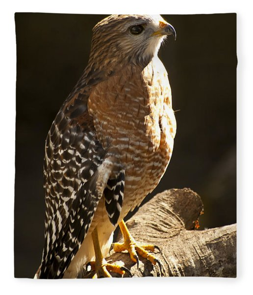 Fleece Blanket featuring the photograph Red-shouldered Hawk by Carolyn Marshall