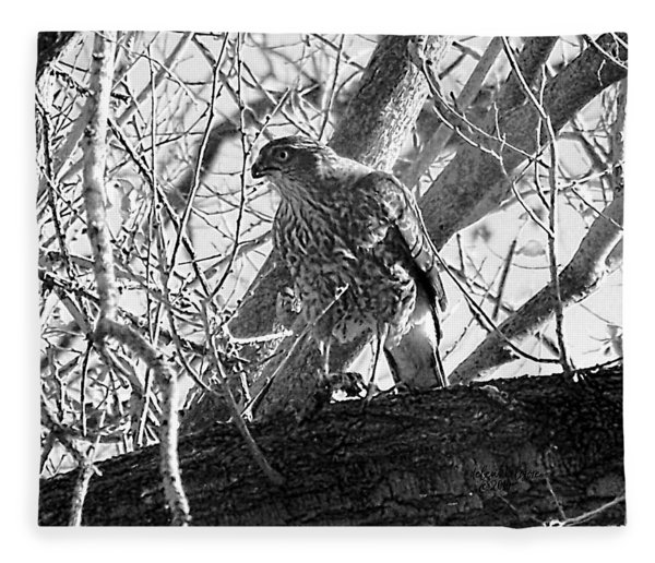 Red Tail Hawk In Black And White Fleece Blanket