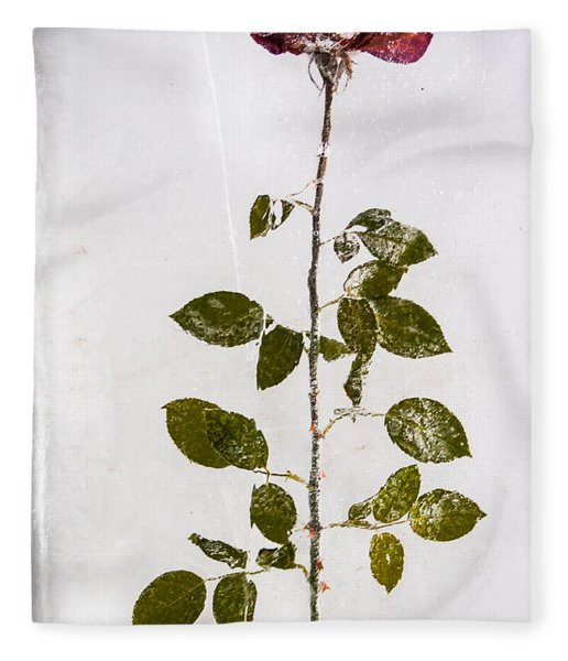 Rose Frozen Inside Ice Fleece Blanket