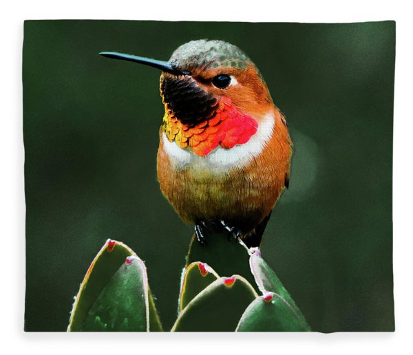 Rufous Hummimgbird Fleece Blanket