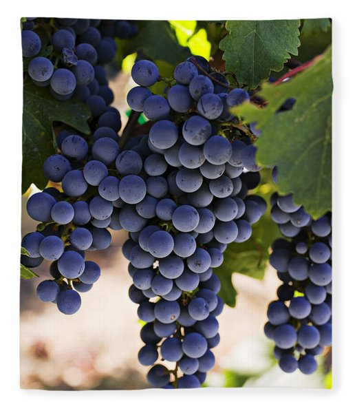 Sauvignon Grapes Fleece Blanket