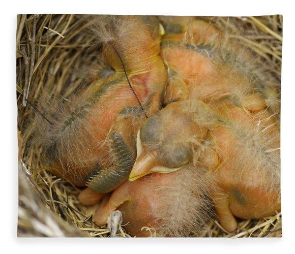 Sleeping Robins Fleece Blanket